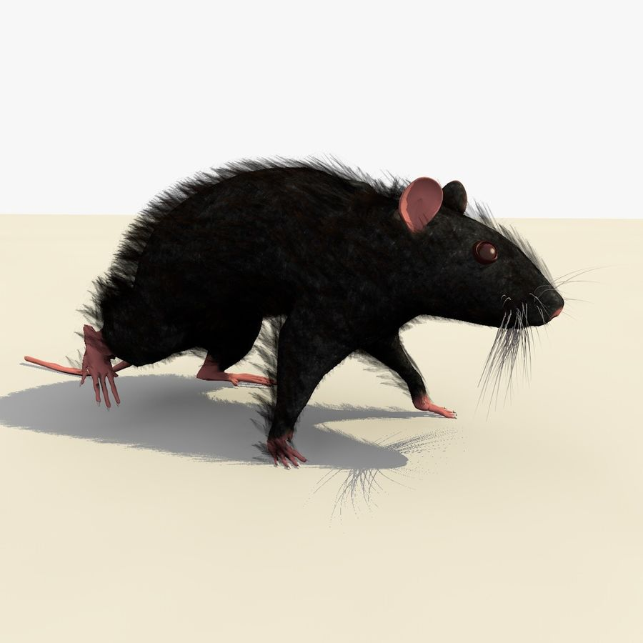Animated Walking Black Mouse royalty-free 3d model - Preview no. 2
