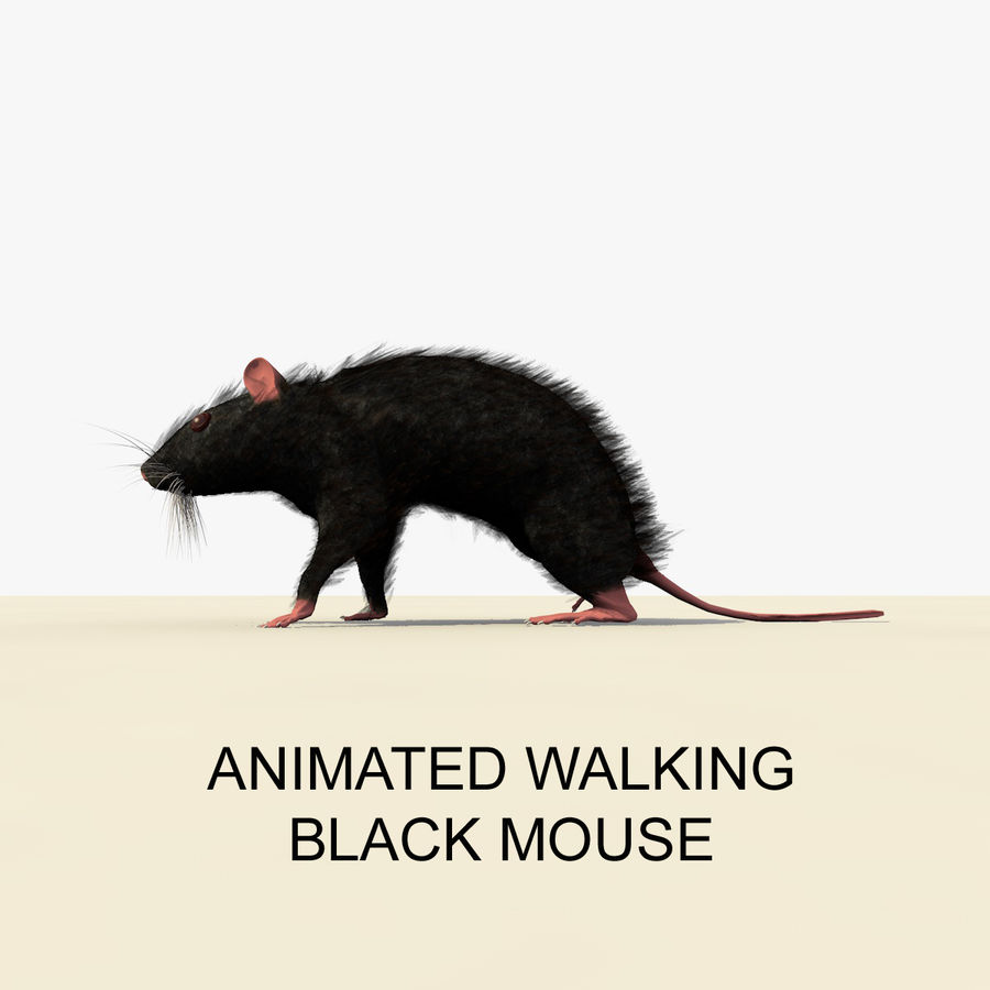 Animated Walking Black Mouse royalty-free 3d model - Preview no. 1