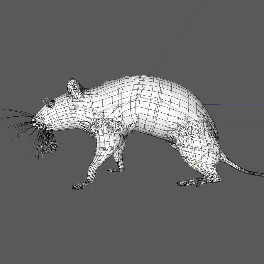 Animated Walking Black Mouse royalty-free 3d model - Preview no. 13
