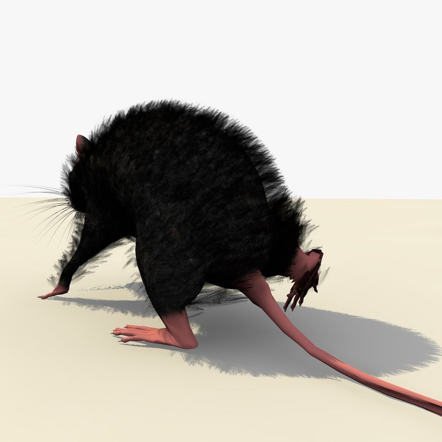Animated Walking Black Mouse royalty-free 3d model - Preview no. 5