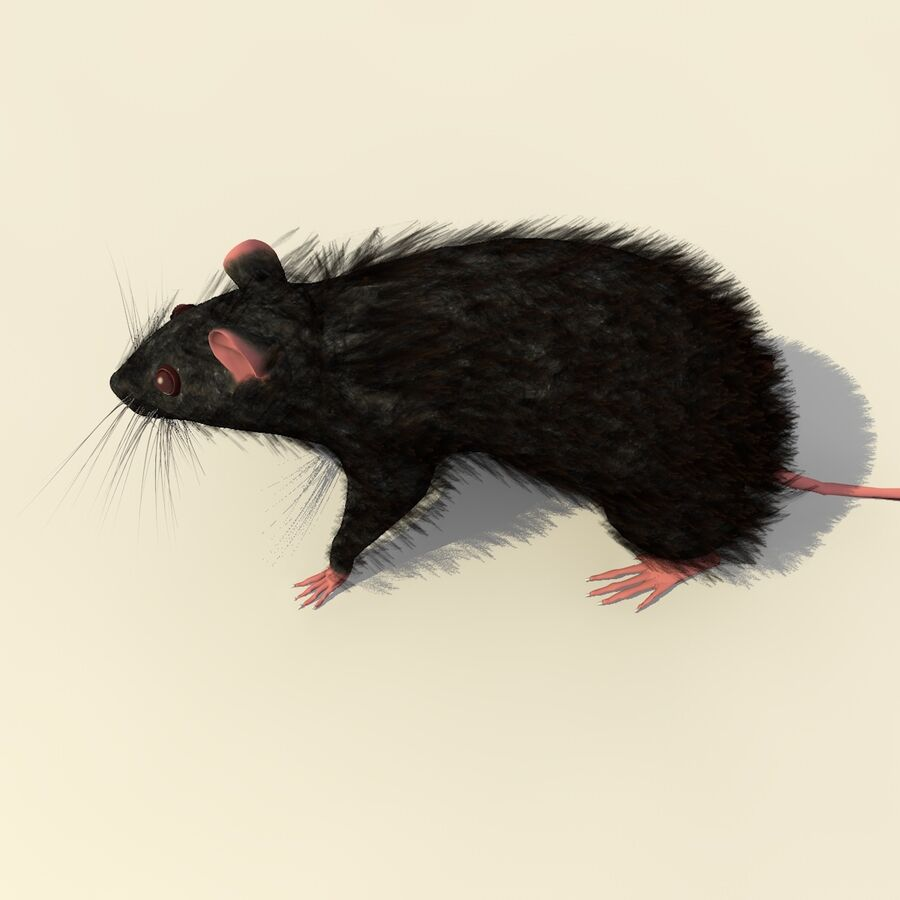 Animated Walking Black Mouse royalty-free 3d model - Preview no. 7