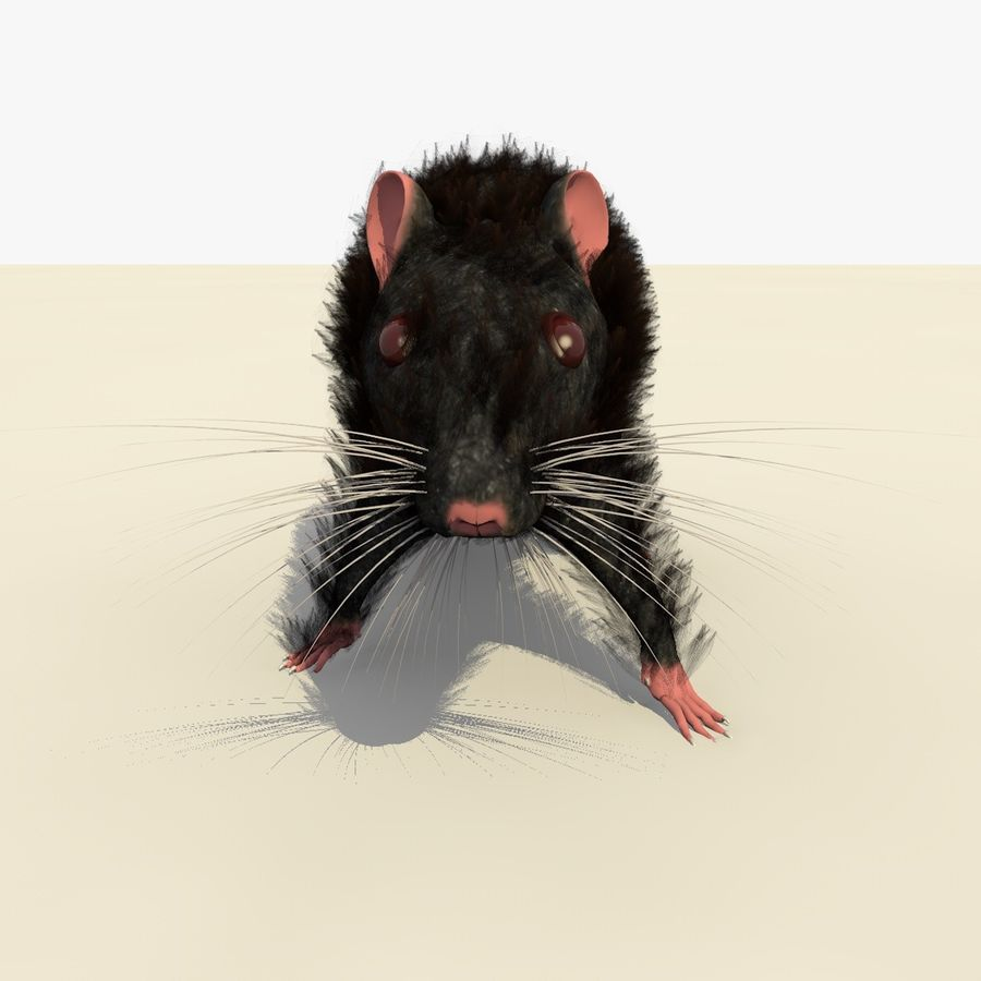 Animated Walking Black Mouse royalty-free 3d model - Preview no. 9
