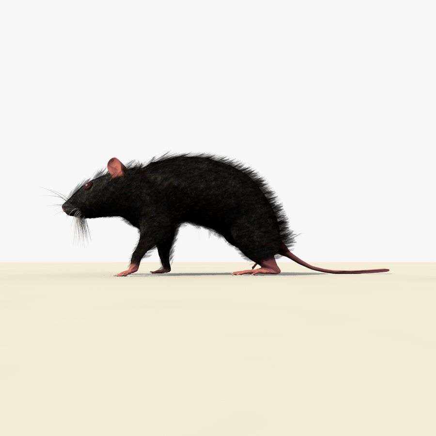 Animated Walking Black Mouse royalty-free 3d model - Preview no. 3