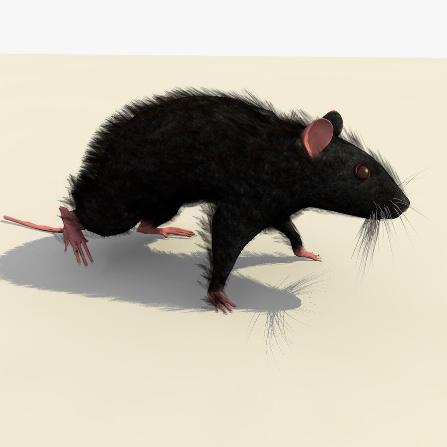 Animated Walking Black Mouse royalty-free 3d model - Preview no. 6