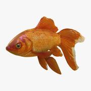 金魚 - ベールテイル 3d model