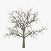 Chêne blanc arbre hiver 3d model