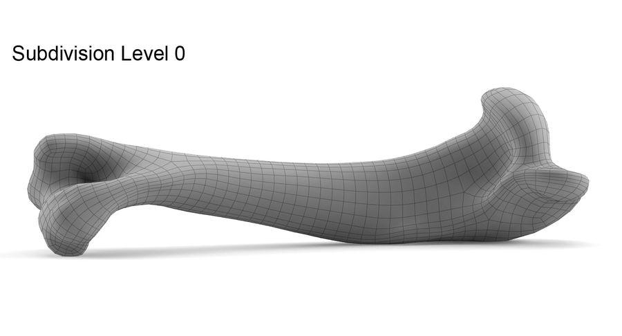 骨 royalty-free 3d model - Preview no. 8