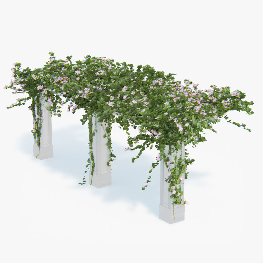 Set climbing roses bougainvillea Of 4 Pergolas With Flowers Ivy royalty-free 3d model - Preview no. 3