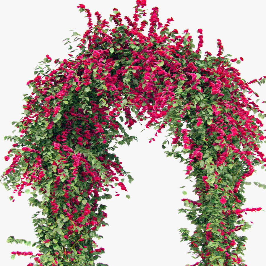 Set climbing roses bougainvillea Of 4 Pergolas With Flowers Ivy royalty-free 3d model - Preview no. 10