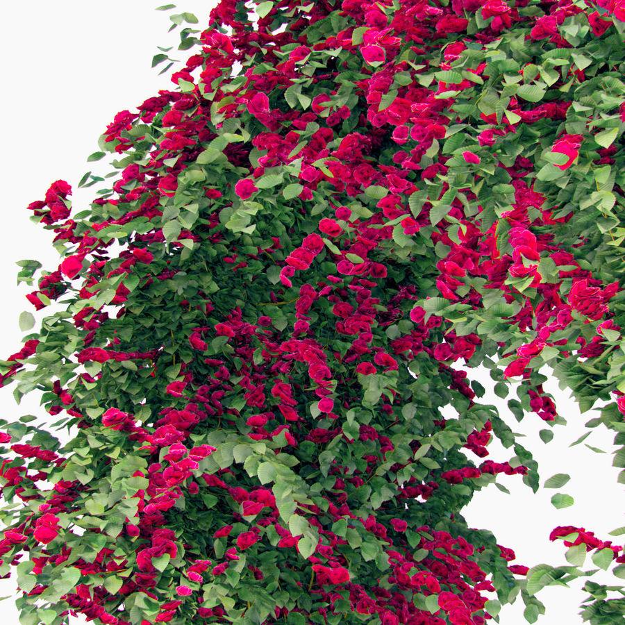 Ustaw róże pnące Bougainvillea 4 Pergole Z Kwiatami Bluszcz royalty-free 3d model - Preview no. 11