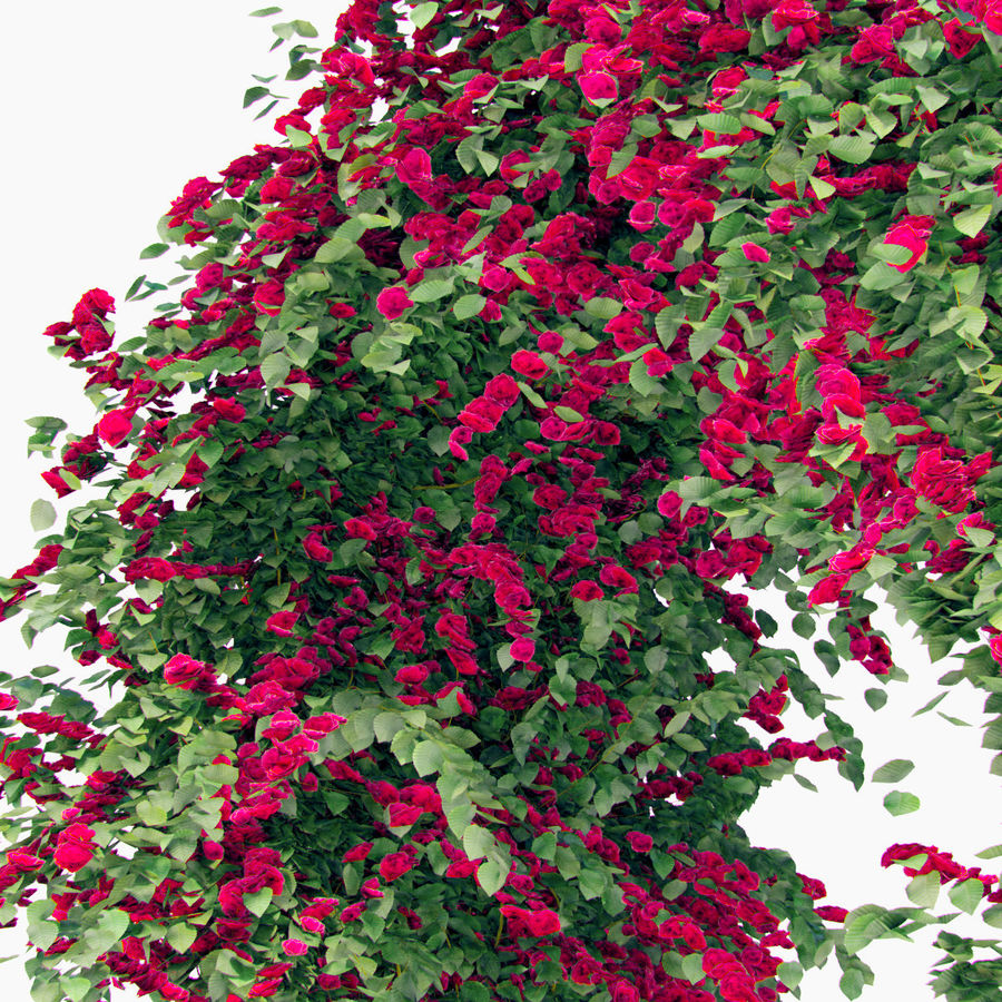 Set climbing roses bougainvillea Of 4 Pergolas With Flowers Ivy royalty-free 3d model - Preview no. 11