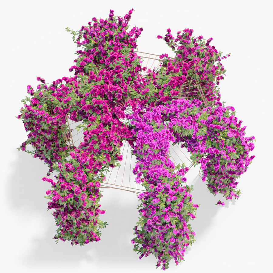 Set climbing roses bougainvillea Of 4 Pergolas With Flowers Ivy royalty-free 3d model - Preview no. 20