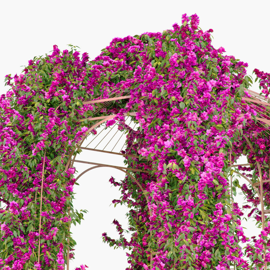 Set climbing roses bougainvillea Of 4 Pergolas With Flowers Ivy royalty-free 3d model - Preview no. 21