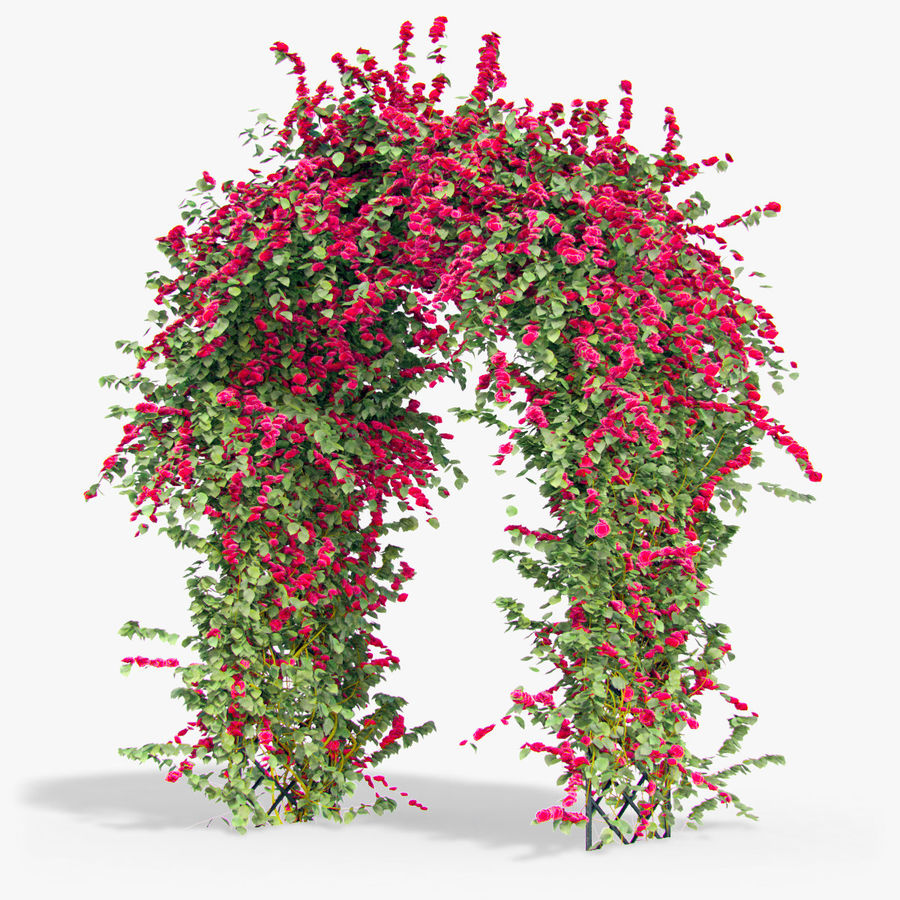 Set climbing roses bougainvillea Of 4 Pergolas With Flowers Ivy royalty-free 3d model - Preview no. 9