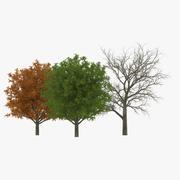 Коллекция белого дуба 3d model