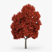 Red Maple Tree 8m 3d model