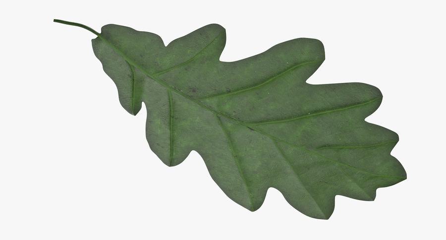 Foglia di quercia verde 01 royalty-free 3d model - Preview no. 6