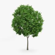 挪威枫树8m 3d model