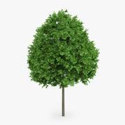 挪威枫树6m 3d model