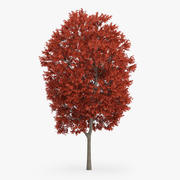 Red Maple Tree 16m 3d model