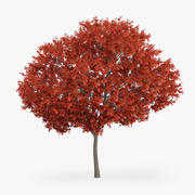 Kırmızı Akça Ağaç 8m 3d model