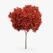 Kırmızı Akça Ağaç 6.5m 3d model