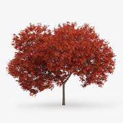 Kırmızı Akça Ağaç 7.5m 3d model