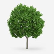 Norveç Akça Ağaç 9m 3d model
