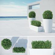 Coastal Modern Bushes 3d model