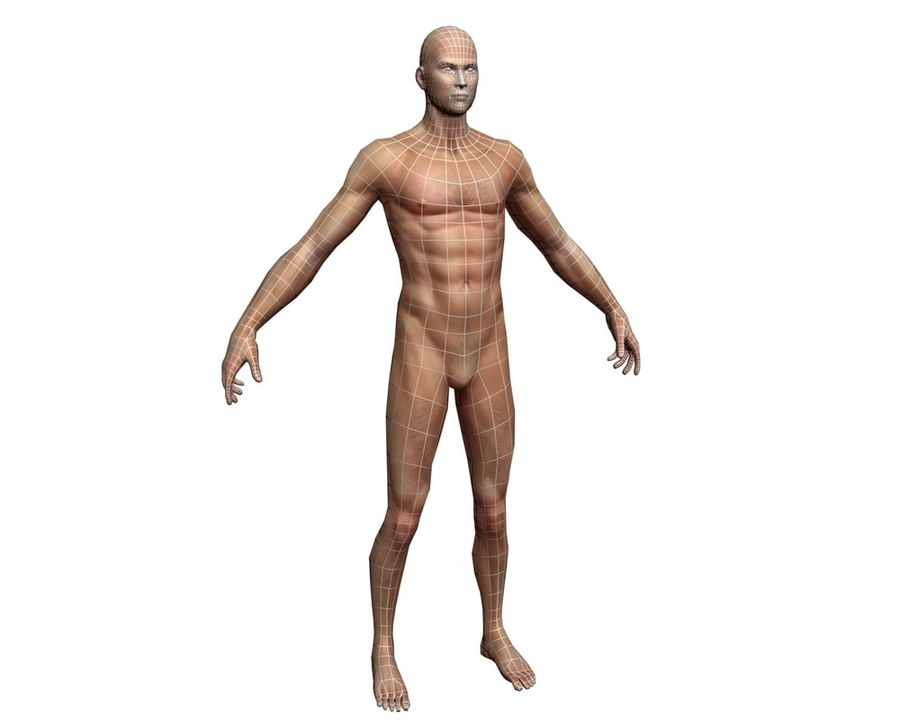 Male human character royalty-free 3d model - Preview no. 8