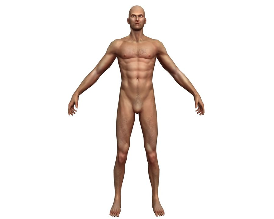 Male human character royalty-free 3d model - Preview no. 2