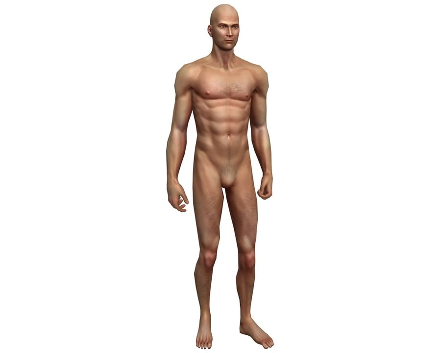 Male human character royalty-free 3d model - Preview no. 1