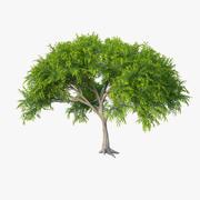 Akasya ağacı 3d model