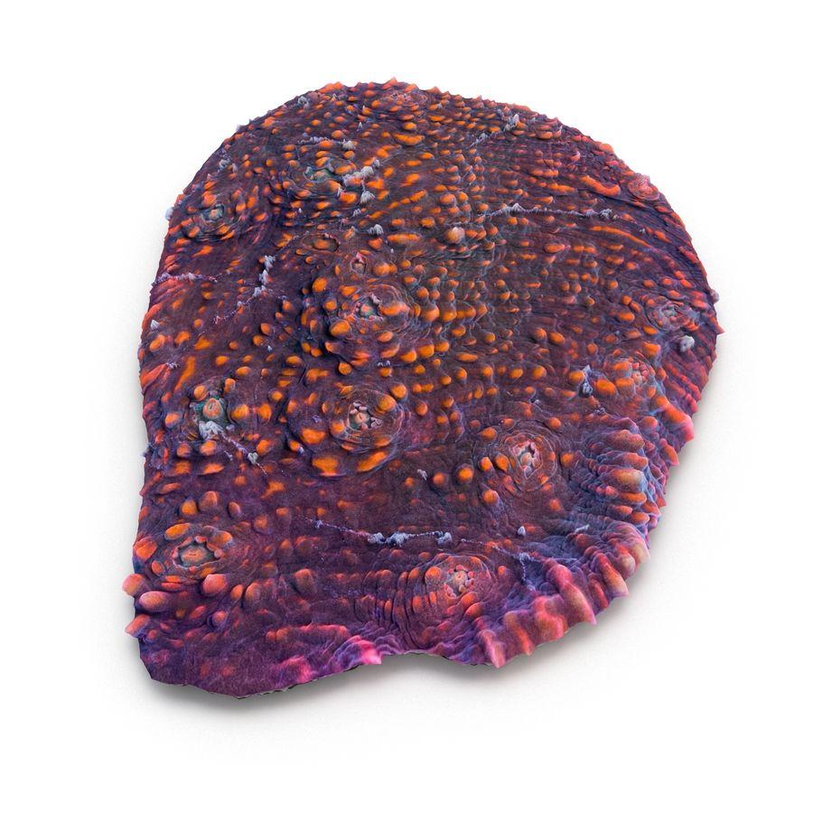 Kielich koralowy 07 royalty-free 3d model - Preview no. 4