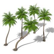 Coconut Palms 3d model