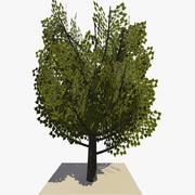 Geanimeerde boom v11 3d model
