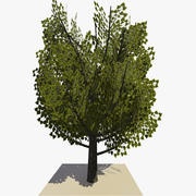 Animated Tree v11 3d model