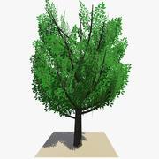 Animated Tree v15 3d model