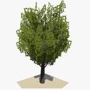 Animated Tree v16 3d model