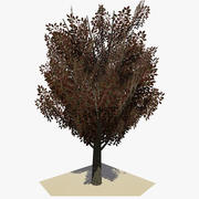 Animated Tree v14 3d model