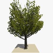 Albero animato v10 3d model