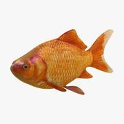 金魚 3d model