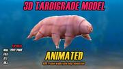 Urso de água animado 3D modelo Tardigrade 3d model