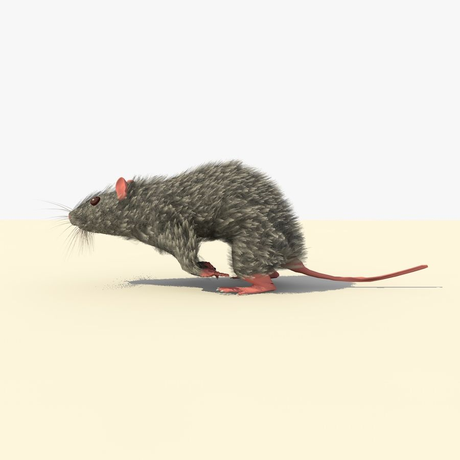 Animated Running Grey Mouse royalty-free 3d model - Preview no. 2