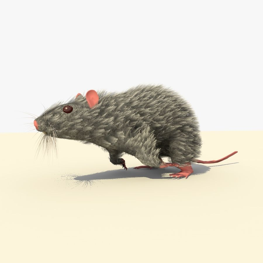 Animated Running Grey Mouse royalty-free 3d model - Preview no. 3