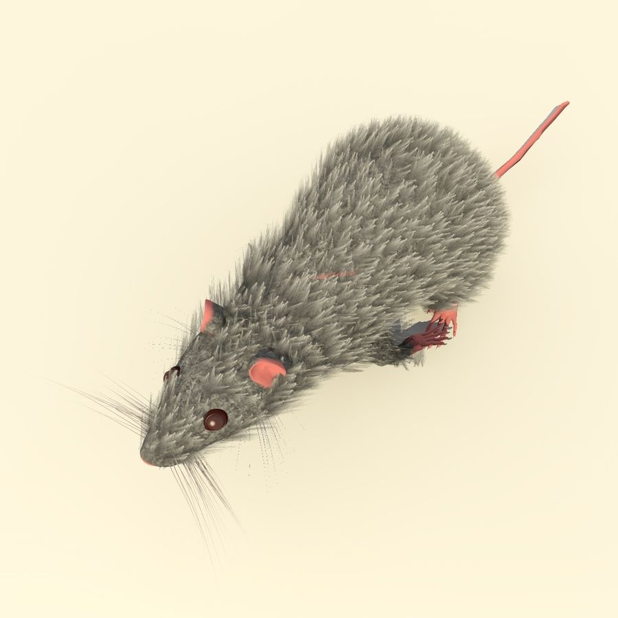 Animated Running Grey Mouse royalty-free 3d model - Preview no. 7