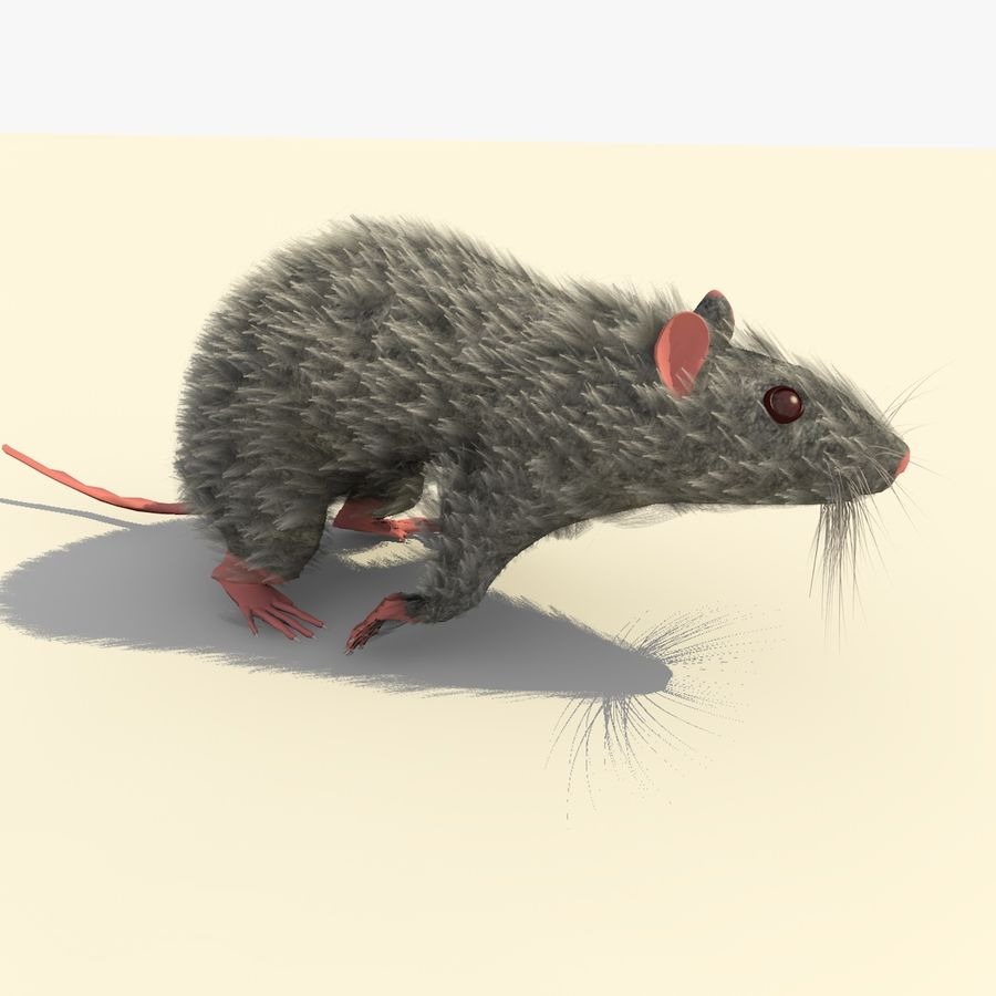 Animated Running Grey Mouse royalty-free 3d model - Preview no. 6
