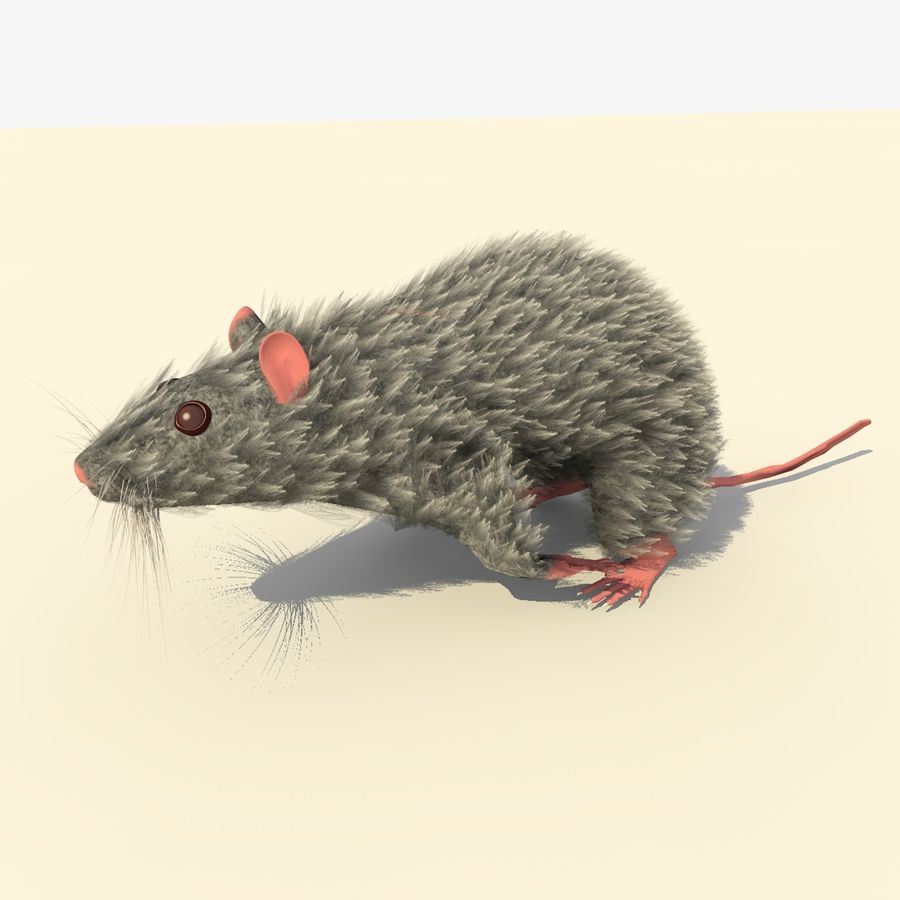 Animated Running Grey Mouse royalty-free 3d model - Preview no. 4
