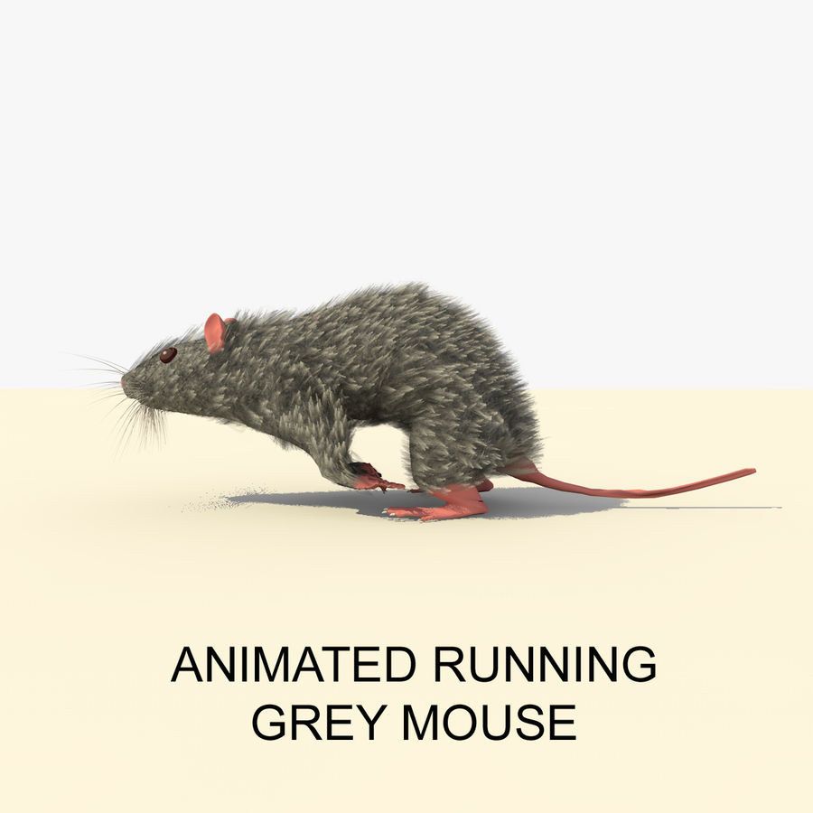 Animated Running Grey Mouse royalty-free 3d model - Preview no. 1