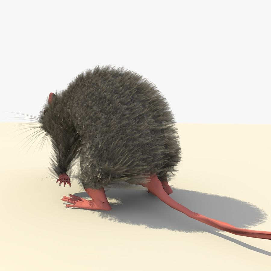 Animated Running Grey Mouse royalty-free 3d model - Preview no. 5